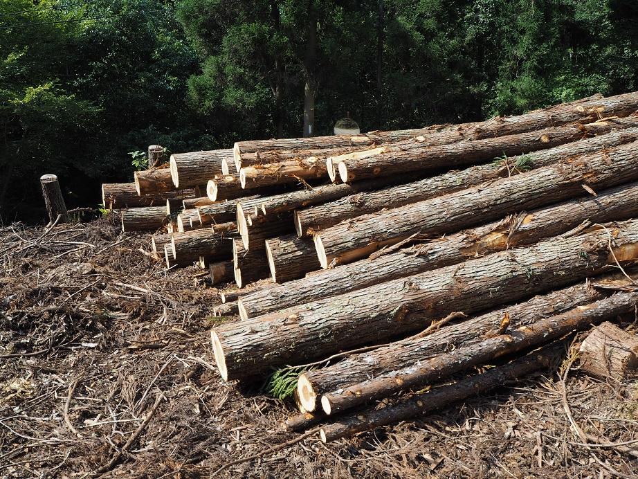 ベストホーム福岡は天然乾燥の材木を使用